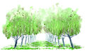 Deciduous tree alley. Royalty Free Stock Photo