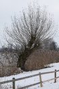 Deciduous tree green stuff reed hague wood fence winter snow lake water nature environment ecology Stock Photography