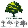 Deciduous tree logo. Vector illustration. Royalty Free Stock Photo