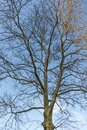 Deciduous trees in winter season in nature