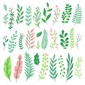 Decor leaves. Green plant leaf, ferns greenery and floral natural fern leaves isolated vector set