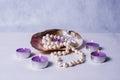 Decor of seashells close-up