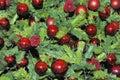 Decorações da Natal-árvore em uma árvore de Natal Fotografia de Stock