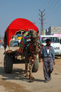 Decorated camel at Pushkar camel fair,Rajasthan Royalty Free Stock Photo
