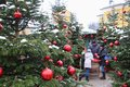 Decorated christmas trees at the Christmas market of Hellbrunn Palace. Salzburg, Austria. Royalty Free Stock Photo