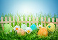 Decorated easter eggs in the grass on blue sky background Stock Photos