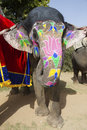 The decorated elephant. Stock Photography