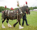 Decorated horse. Royalty Free Stock Images