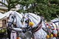 Decorated horse carriages at main square in Krakow in a summer day, Poland Royalty Free Stock Photo