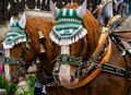 Decorated horse team on a parade. Royalty Free Stock Photo