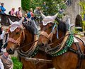 Decorated horse team at a parade in Garmisch-Partenkirchen, Garmisch-Partenkirchen, Germany - May 20. Royalty Free Stock Photo