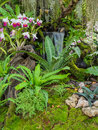 Decorated orchid garden with waterfall Stock Photo
