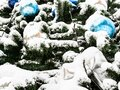 Decorated snow-covered Christmas tree close up Royalty Free Stock Photo