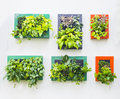 Decorated wall in vertical garden Royalty Free Stock Photo