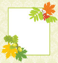 DecoratFrame with acorns, rowan and maple leaves Stock Photos