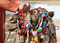 Decoration camel at the pushkar fair pushkar camel mela camel s head close up pushkar rajasthan india asia Stock Images