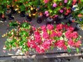 Decoration Flowers on Table Himachal Pradesh India Background