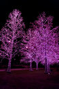 Decoration lights on trees at night Royalty Free Stock Image