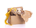 Decoration rabbit in box set Royalty Free Stock Photo