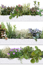 Decorative and aromatic herbs and flowers Royalty Free Stock Photo