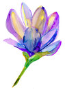 Decorative blue flower watercolor illustration Stock Photo