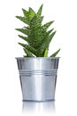 Decorative cactus metal pot isolated white background Royalty Free Stock Photo
