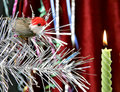 Decorative candle and birdy Royalty Free Stock Photography
