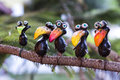 Decorative crows five on the branch of tree Royalty Free Stock Photos