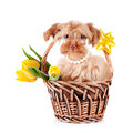 Decorative doggie basket puppy as gift dog flowers shaggy small doggie decorative thoroughbred dog puppy petersburg orchid Stock Image