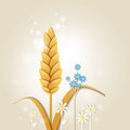 Ear of wheat and flowers Royalty Free Stock Photo