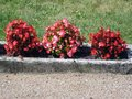 Decorative flower bed with concrete frame and red flowers Stock Photography