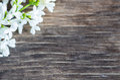 Decorative Flowers Background