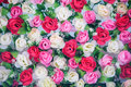 Decorative Flowers Royalty Free Stock Photo