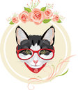Decorative frame with pink roses and portrait of a funny cat with red glasses Royalty Free Stock Photo