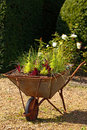 Decorative garden wheelbarrow with culinary herbs Stock Image