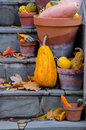 Decorative gourds in pots pumpkins and fall leaves are displayed on slate steps for the autumn festivals Royalty Free Stock Photography