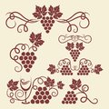 Decorative grape vine elements for design Royalty Free Stock Photos