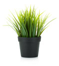 Decorative grass in flowerpot Royalty Free Stock Photos