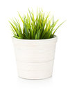 Decorative grass in flowerpot Stock Images