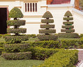 Decorative greenery in front of the house Stock Photo