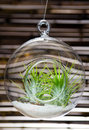Decorative hanging terrarium against bamboo background Royalty Free Stock Photography