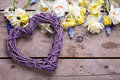 Decorative heart and spring narcissus or daffodils flowers on
