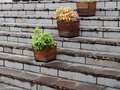 Potted flowers on granite steps. city decor Royalty Free Stock Photo