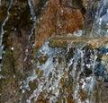 Decorative koi pond in a garden Royalty Free Stock Photo