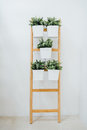 A decorative ladder plant stand to grow several plants together vertically. Royalty Free Stock Photo