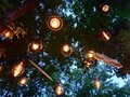 Decorative Lamps On The Trees.