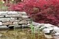 Decorative maple trees Royalty Free Stock Photo