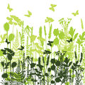 Decorative meadow Silhouettes of different plants wild, flowers