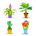 Decorative office flower icons set interior palm cactus plant isolated sketch vector illustration Stock Photography