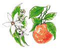 Decorative Orange flower blossom Royalty Free Stock Photo